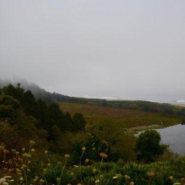 Oregon Coast Teil 2