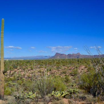 Saguaro Nationalpark – Tucson